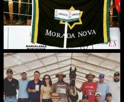 XXX CBM Cavalo Mangalarga Machador-ES